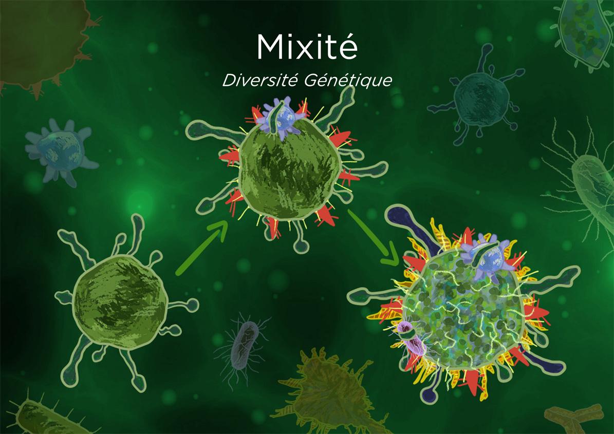 Biocorp_Mixité